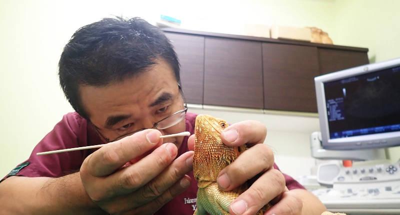 リュウキュウキノボリトカゲの顔色を見て気づかされたこと